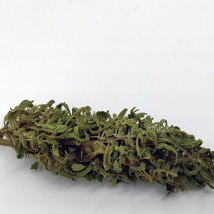 Cannabis Light – Dove Acquistare Prodotti di Qualità a Prezzi Imperdibili.
