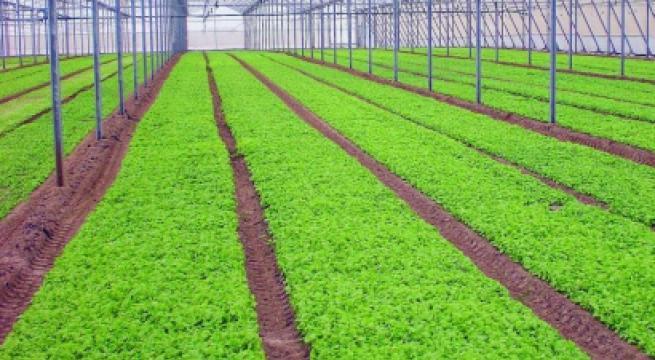 Guglielmo Alessio ed il sistema di coltivazione Out Ground