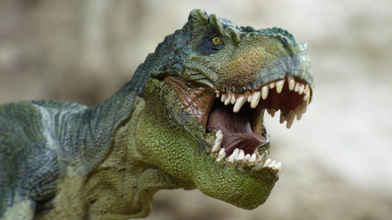 Dinosauri 360: le più complete informazioni sul T-Rex